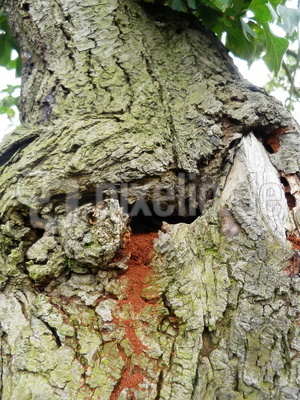 Eingang Hornissen-Nest