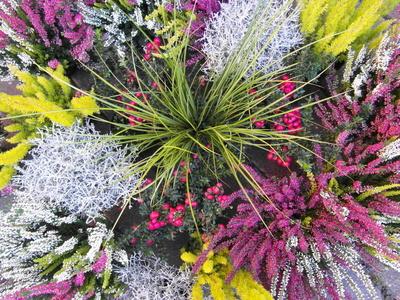 kostenloses foto winterharte bepflanzung