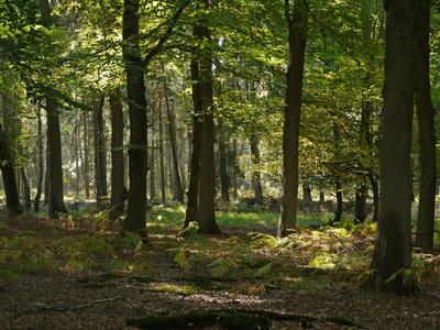 Blick in den Herbstwald