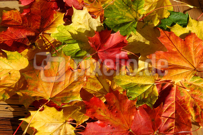 im Herbst 3