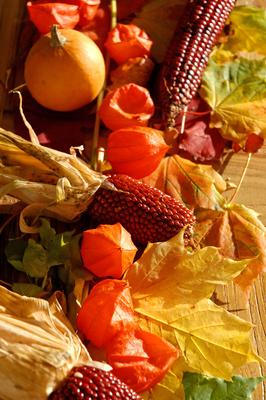 im Herbst 6