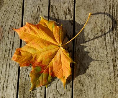 im Herbst 9