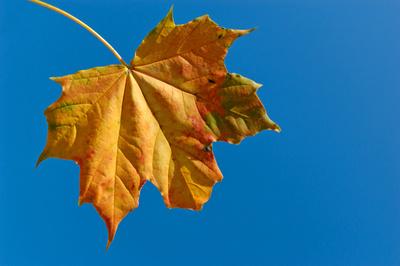 im Herbst 10