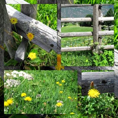 gelber Blumenzaun