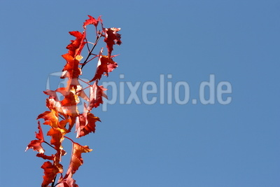 Herbstlaub 35