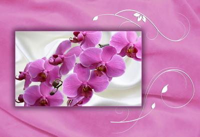 Orchideen auf Samt und Seide
