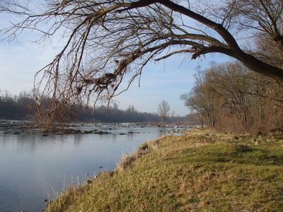 Am Altrhein an den Isteiner Schwellen