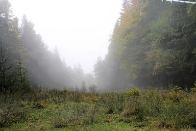 Ein Tag im Nebel 01