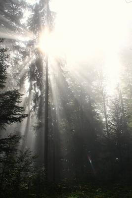 Ein Tag im Nebel 08 - vage Hoffnung