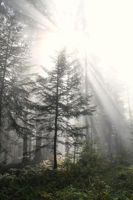 Ein Tag im Nebel 09 - vage Hoffnung