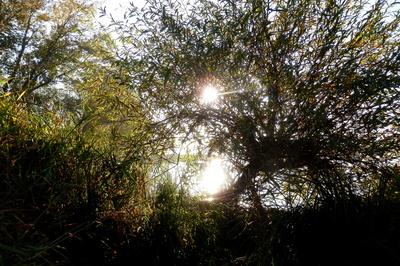 Ein Herbstmorgen am Fluss