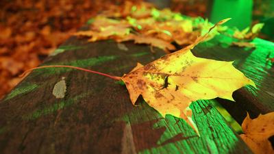 Herbstpause
