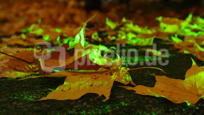 Herbstpause II
