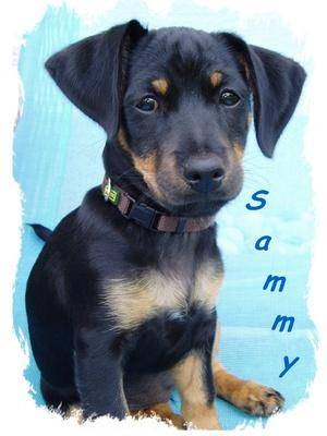 Sammy der Hund