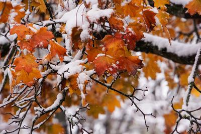Oktober-Schnee_1