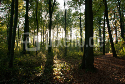 Rahmer Wald
