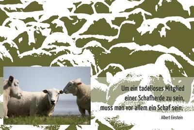 Schaf sein