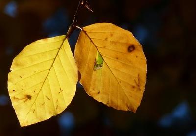 Goldenes Pärchen