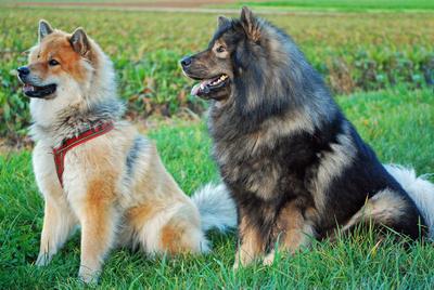 Ayla & HarCo