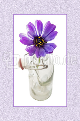 Blume-0096
