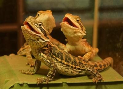 Krokodile?