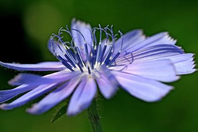Blume-0097