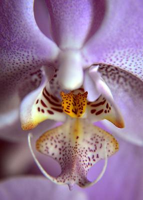 Orchideendetail