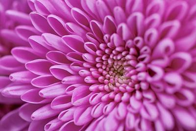 Blume-0103
