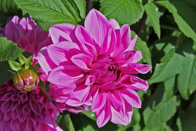 Blume-0104