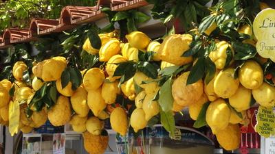 Zitronen in Neapel