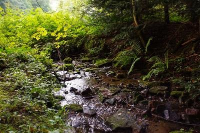 Bach im Unterholz