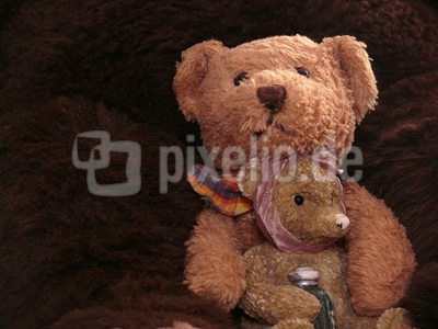 Bärenfreundschaft