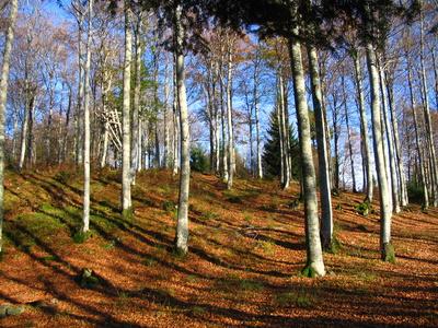 Idylischer Herbstwald