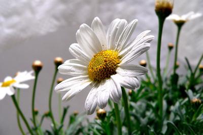 Blume-0113