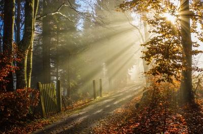 Morgensonne im Herbstnebel mit Gartentür