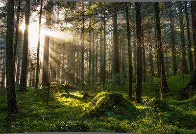 Morgensonne mit Herbstnebel im Wald