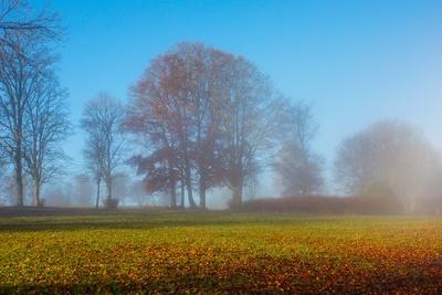 Nebelmorgen im Park
