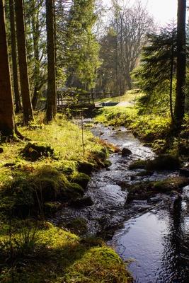 Waldbach im Herbst