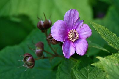 Blume-0116