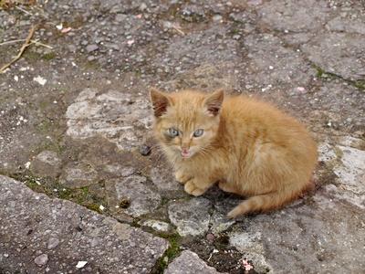 kleines Kätzchen verloren auf Bürgersteig