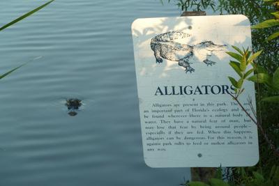 Aligator is getting close, hasn't got me yet!