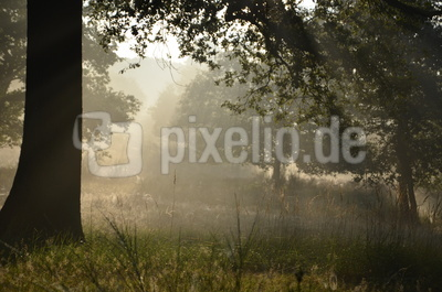 Herbst in der Wahner Heide
