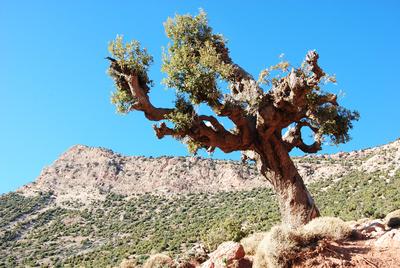 Marokko - Vom Winde verweht im Hohen Atlas