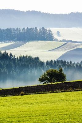 Feld und Wald im Morgendunst_hoch