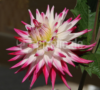 Blume-0122