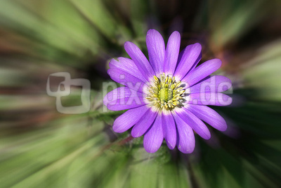 Blume-0131