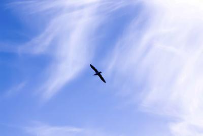 Fly Freestyler