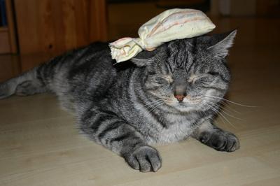 Silvester-Kater in Katerstimmung - ein Katzenjammer