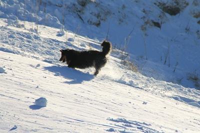 Lawinensuchhund 03