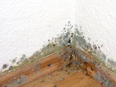 schimmelpilze im Haus